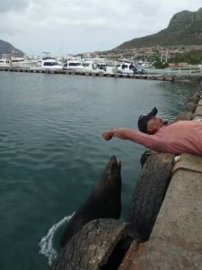 The only interesting seal at Hout Bay