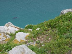 View from top of Cape of Good Hope, complete with whale